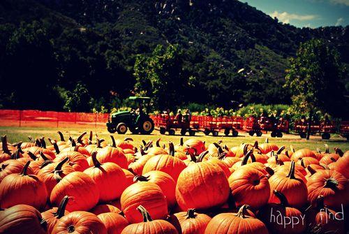 Pumpkin hunt 2011.1