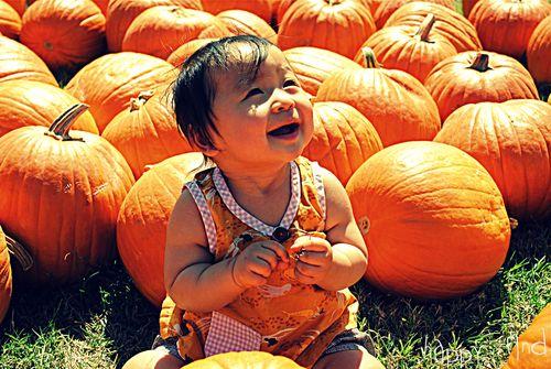 The great pumpkin hunt 3