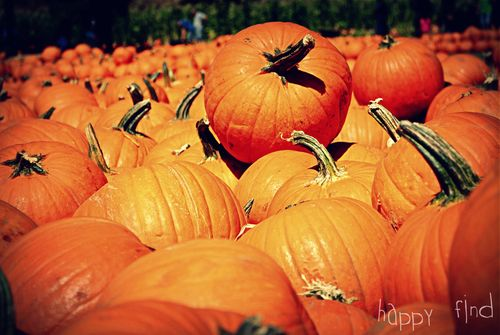 The great pumpkin hunt 2